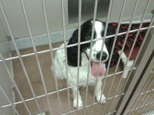 AJ at the shelter