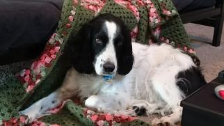 On Grandma's blanket again