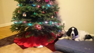 Hanging out by the Christmas tree.