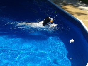 AJ retrieves pool toy