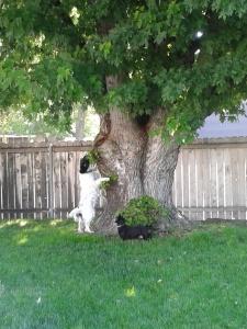 AJ chasing squirrels