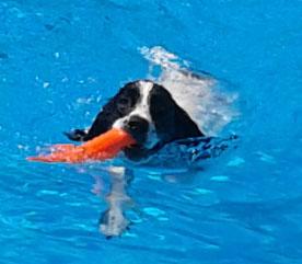 See Spot Splash