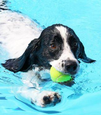 AJ swimming