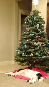 AJ under the Christmas tree
