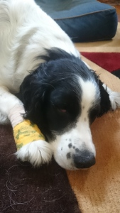 Sleepy and bandaged