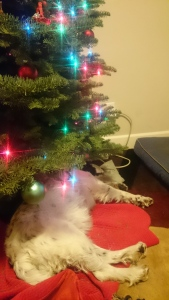 AJ sleeping under the Christmas tree